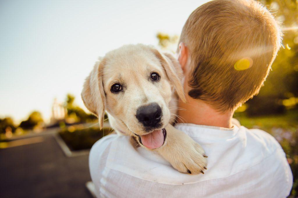 cães e jovens