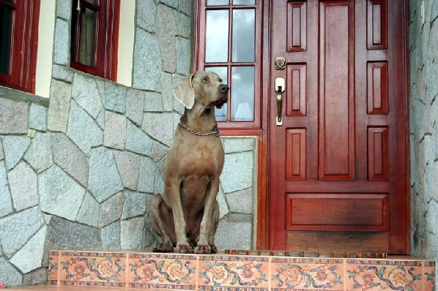 cão de guarda