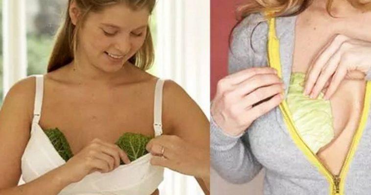 Por que mulheres colocam folhas de couve nos seios